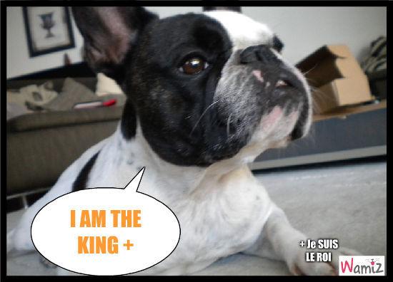KING !!!!, lolcats réalisé sur Wamiz
