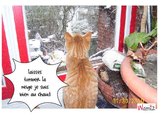 tombe la neige, lolcats réalisé sur Wamiz