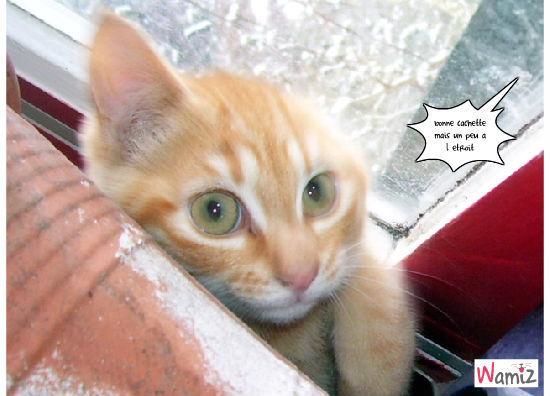 chat caché, lolcats réalisé sur Wamiz