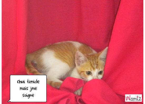chat cache, lolcats réalisé sur Wamiz