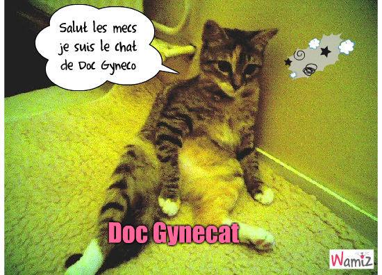 Doc Gynecat, lolcats réalisé sur Wamiz