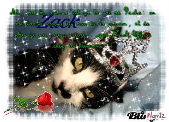 Zack Effron...The CAT!, lolcats réalisé sur Wamiz