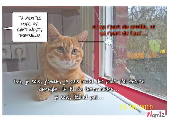 Chat-iment pour Monsieur Chat., lolcats réalisé sur Wamiz