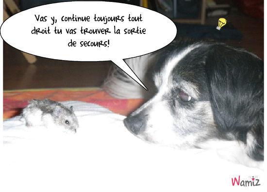 la souris et le chien, lolcats réalisé sur Wamiz
