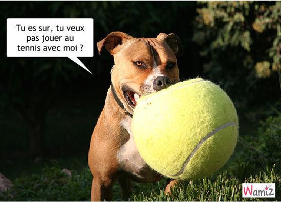 chien tennis, lolcats réalisé sur Wamiz