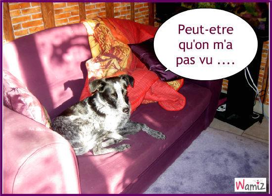Canapé ... en douce ! , lolcats réalisé sur Wamiz