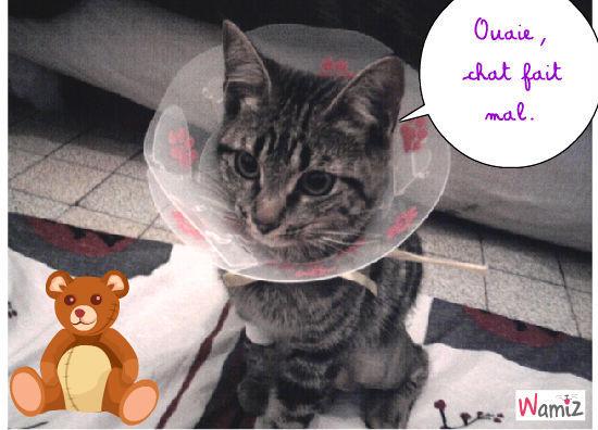 Chat fait mal, lolcats réalisé sur Wamiz