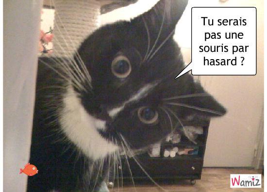 chat cherche souris, lolcats réalisé sur Wamiz