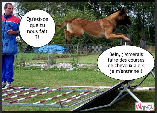 Le chien, qui voulait devenir Cheval., lolcats réalisé sur Wamiz