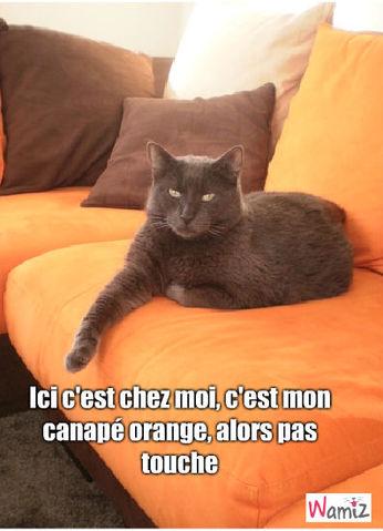 Canapé orange, lolcats réalisé sur Wamiz