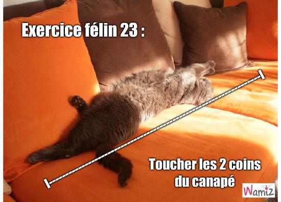 Fitness cat, lolcats réalisé sur Wamiz