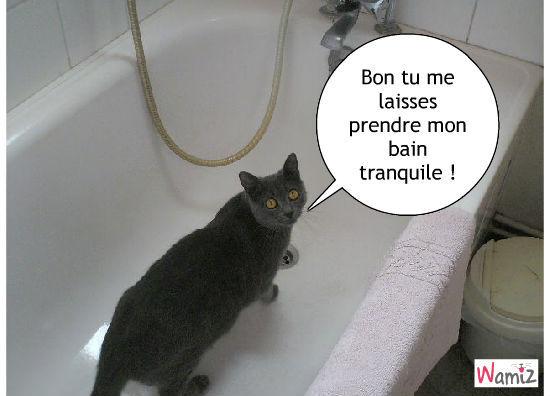le bain du chat, lolcats réalisé sur Wamiz