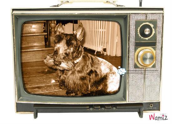 simon tv, lolcats réalisé sur Wamiz