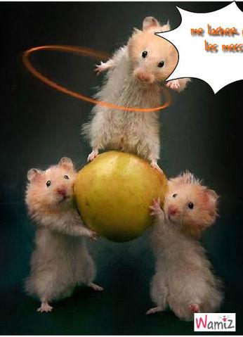 Hamsters, lolcats réalisé sur Wamiz