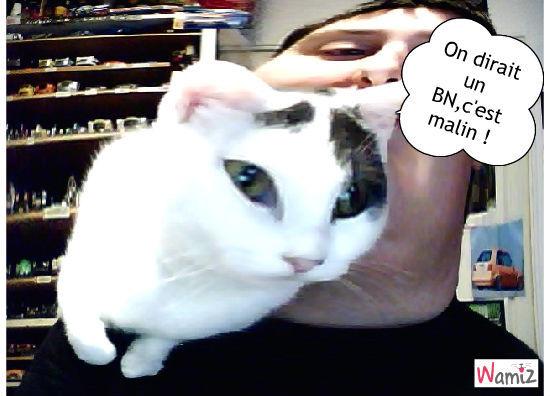 Nioubie et la webcam, lolcats réalisé sur Wamiz
