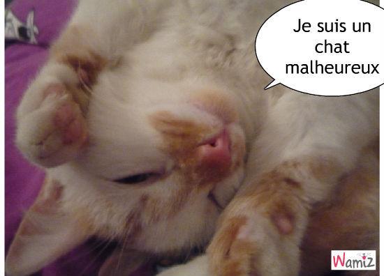 Dustin : chat malheureux, lolcats réalisé sur Wamiz