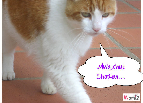 Charou, lolcats réalisé sur Wamiz
