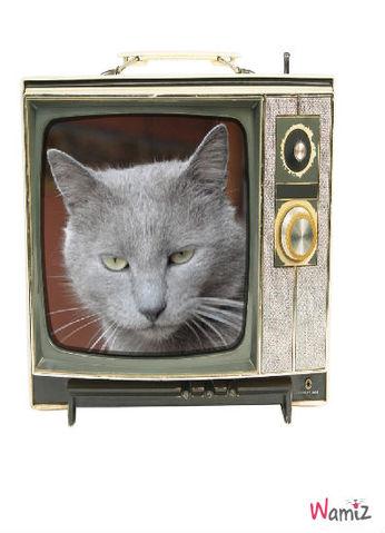 Lulu TV, lolcats réalisé sur Wamiz