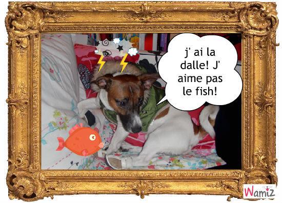 youki qui n' aime pas le poisson!, lolcats réalisé sur Wamiz