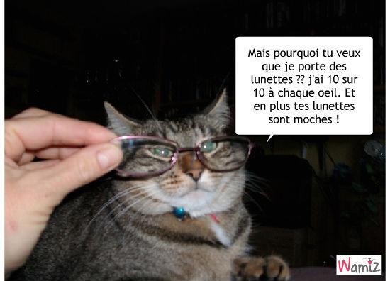 chat lunette, lolcats réalisé sur Wamiz