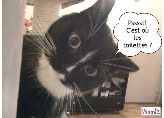 C'est où les toilettes ?, lolcats réalisé sur Wamiz