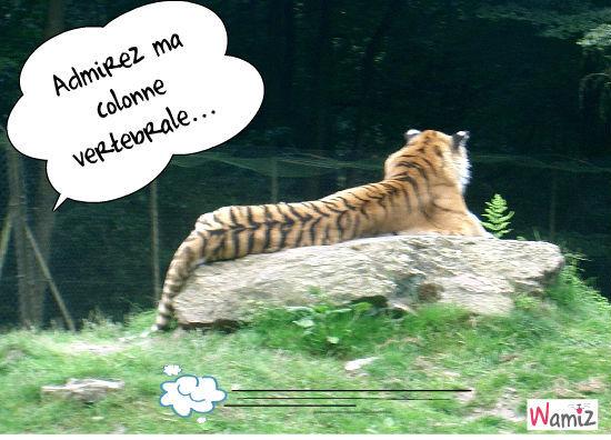 Tigre de dos, lolcats réalisé sur Wamiz