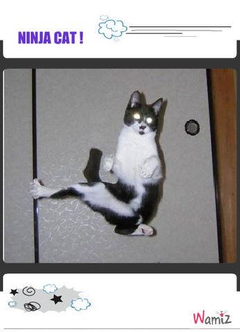 Ninja cat, lolcats réalisé sur Wamiz