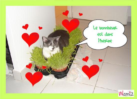 l'herbe à chat, lolcats réalisé sur Wamiz