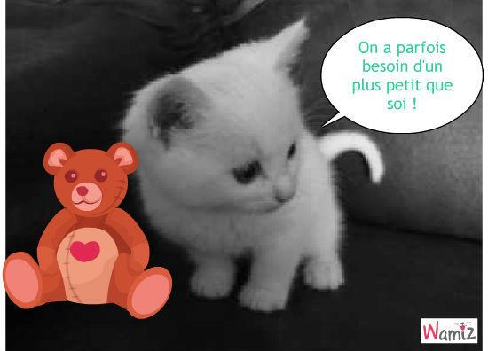Petit  chat miniature, lolcats réalisé sur Wamiz
