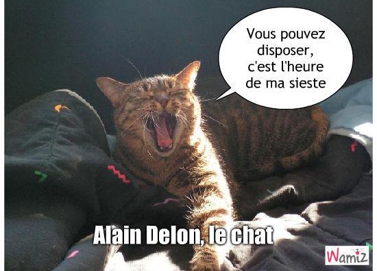 Alain Delon fait la sieste, lolcats réalisé sur Wamiz