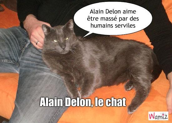 Le massage d'Alain Delon, lolcats réalisé sur Wamiz