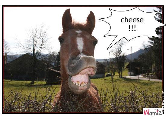 cheese, lolcats réalisé sur Wamiz