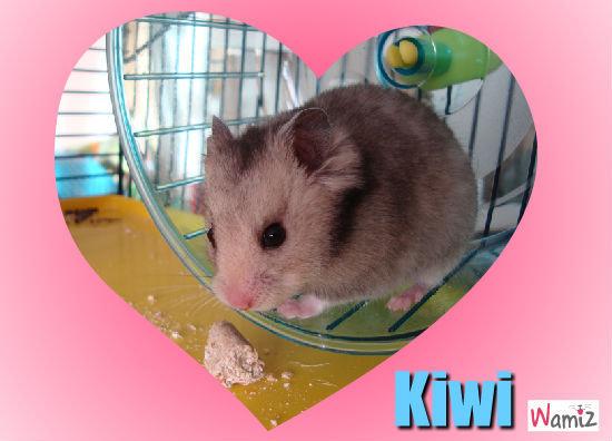 Kiwi le plus beau !, lolcats réalisé sur Wamiz