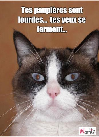 le chat hypnotiseur, lolcats réalisé sur Wamiz