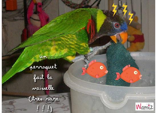 le perroquet qui fait la vaisselle, lolcats réalisé sur Wamiz