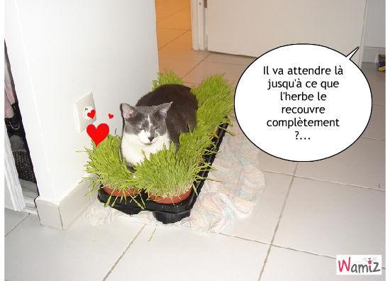 L'herbe à chat !, lolcats réalisé sur Wamiz