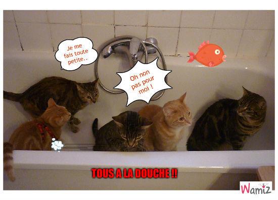 A la douche ! , lolcats réalisé sur Wamiz