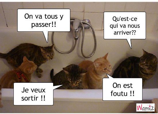 le bain de chats, lolcats réalisé sur Wamiz
