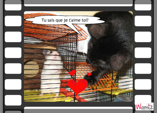 Cookie aime Filou, lolcats réalisé sur Wamiz