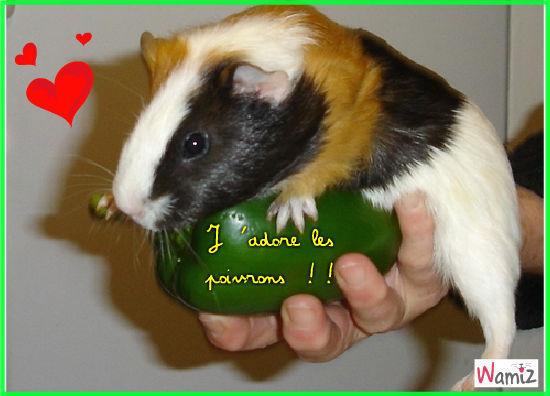 Cookie et le poivron !!, lolcats réalisé sur Wamiz