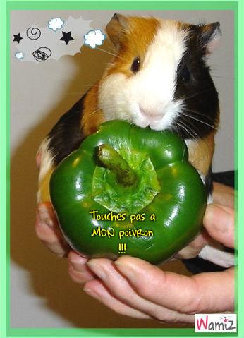 histoire de poivron ..., lolcats réalisé sur Wamiz