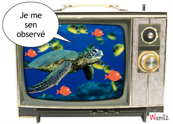 turtle, lolcats réalisé sur Wamiz