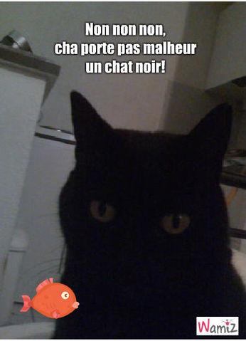 chat noir, lolcats réalisé sur Wamiz