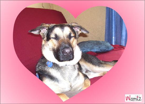 mon chien chien, lolcats réalisé sur Wamiz