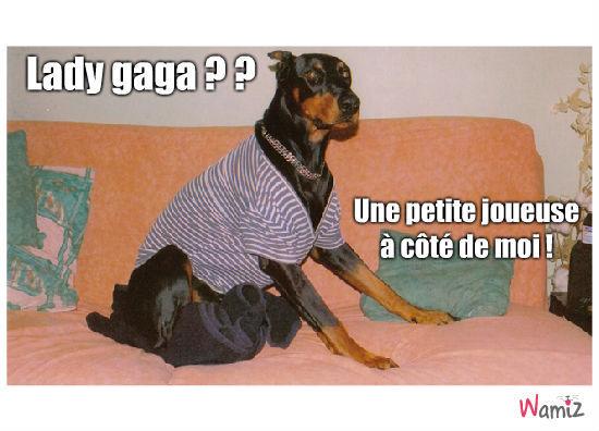 Lady Gaga, lolcats réalisé sur Wamiz