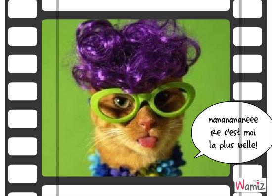miss cat 2010, lolcats réalisé sur Wamiz
