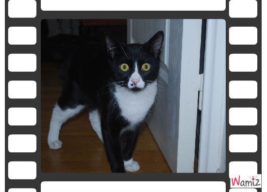 Mon chat, un acteur!, lolcats réalisé sur Wamiz