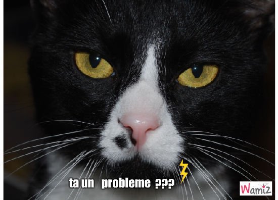 Ta un problème ?, lolcats réalisé sur Wamiz