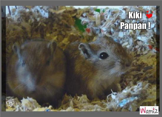 Kiki & Panpan, lolcats réalisé sur Wamiz