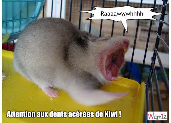 Kiwi qui baille ! (A l'origine lol), lolcats réalisé sur Wamiz